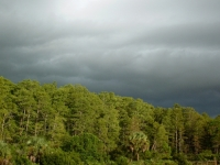 Green Trees And Stormy Sky