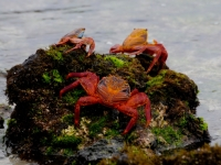 Colorful Crabs