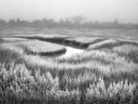 Sunlit Marsh In Fog