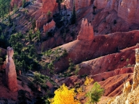Autumn In Bryce Canyon