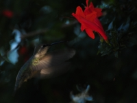 Ray Of Light & The Hummingbird