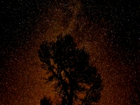 Starry Madison River Cottonwood