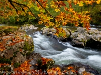 Cascades Of Fall