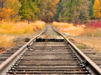 Following The Tracks To Fall