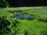 Creek In Meadow