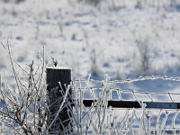 Frozen Fence Post