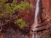 Zion Ntl. Park - Waterfall