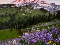 Mt. Rainier Sunrise At Indian Bar