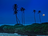 Moon Under Coconut Trees