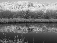 Winter Reflection In Black And White