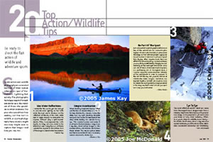 20 Top Action/Wildlife Tips