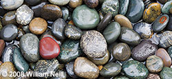 Pebbles Panoramic