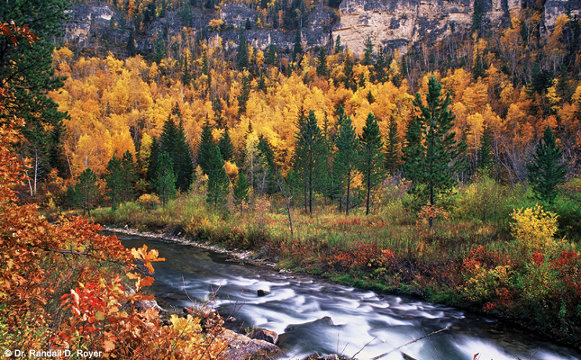 Spearfish Canyon, Black Hills National Forest, South Dakota