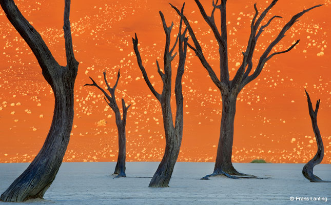 Ghost Trees, Namibia