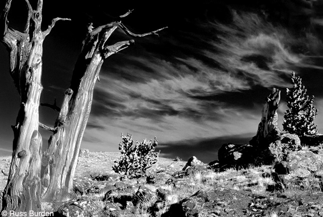 B&W Adjustment Layer – Explore Infrared
