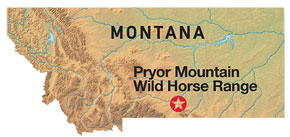 Pryor Mountain Wild Horse Range