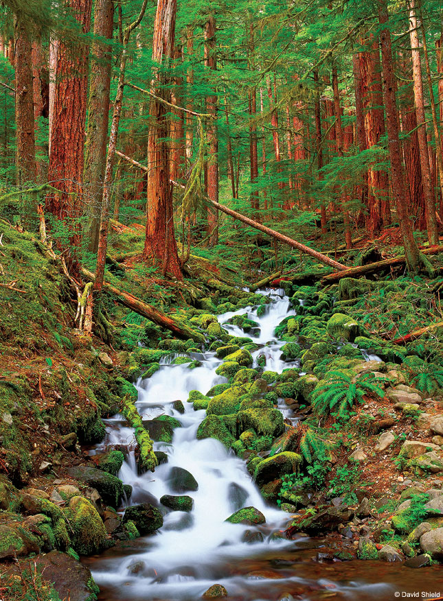 Sol Duc Springs, Olympic National Park, Washington