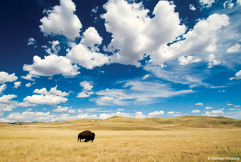 Wildlife Of The Great Plains