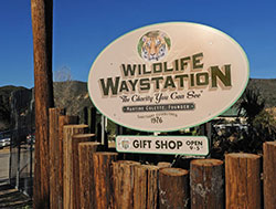 Wildlife Waystation Photo Contest
