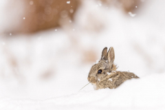 """""""Bunny in the Snow"""" By Dawn Wilson"""