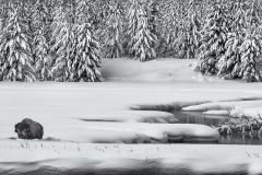 """""""Yellowstone Winter"""" By Stan Bysshe"""
