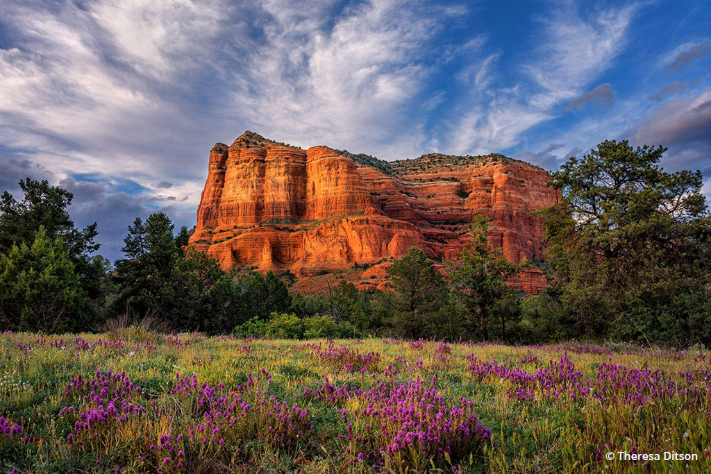 Courthouse Butte Wildflowers By Theresa Ditson