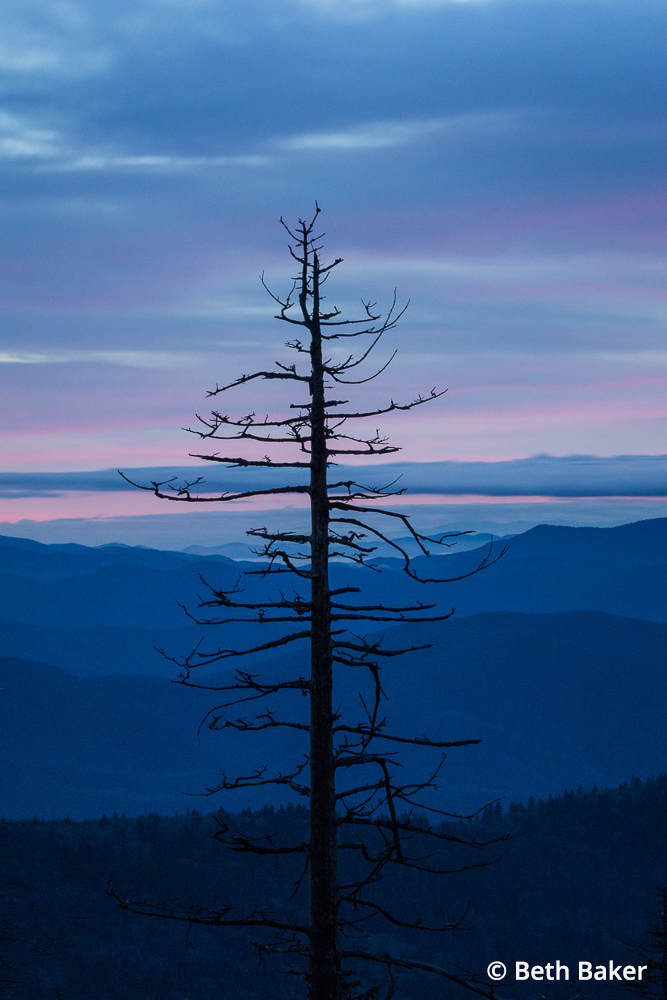 """Blue Hour Tree"" By Beth Baker"