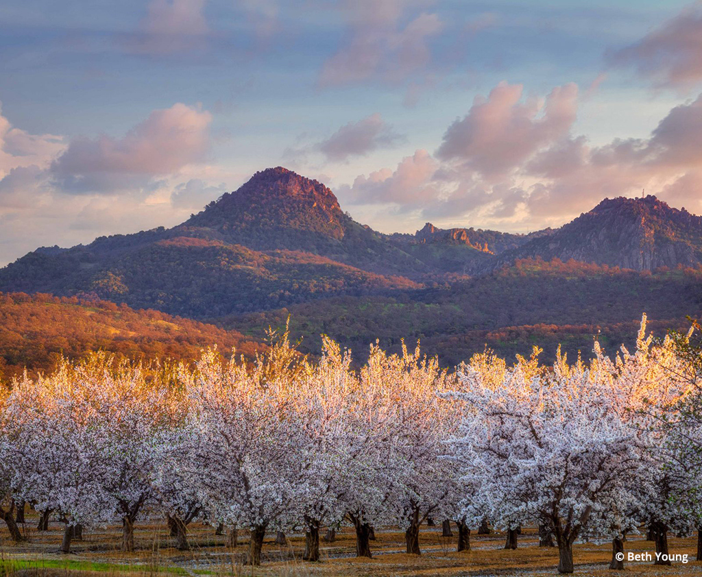 """""""Sutter Buttes and Blooming Almond Orchards""""  By Beth Young"""