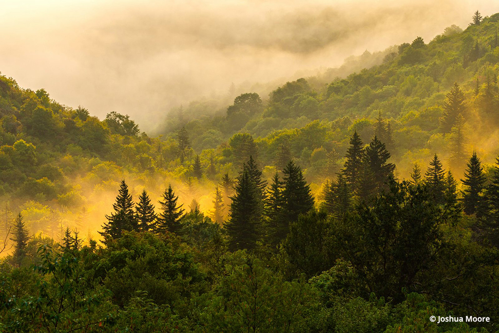 """""""Golden Forest"""" By Joshua Moore"""