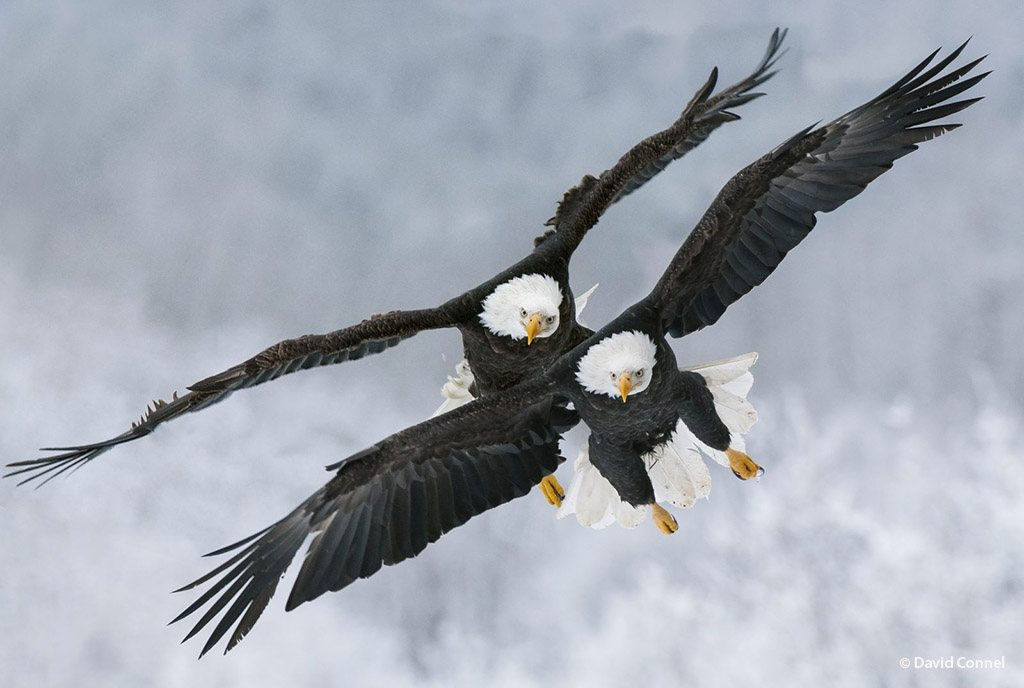 """""""Aerial Contest"""" by David Connel"""