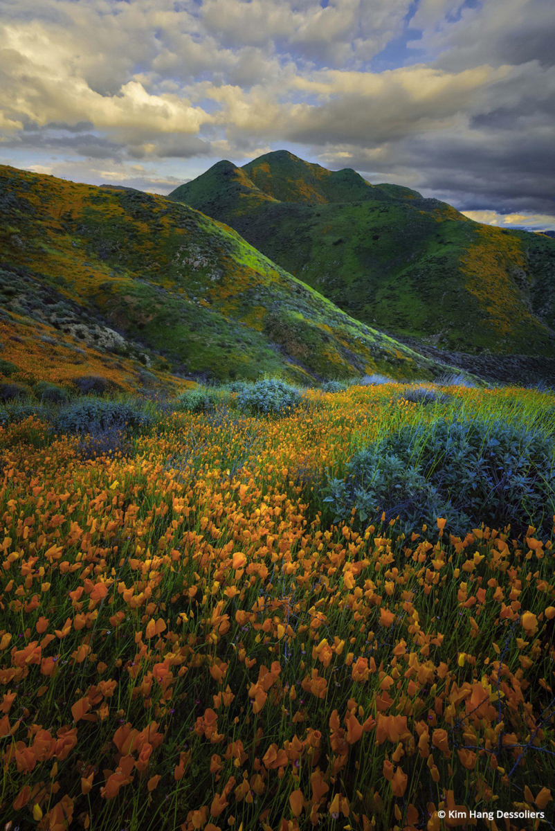 """""""Walker Canyon Super Bloom"""" By Kim Hang Dessoliers"""