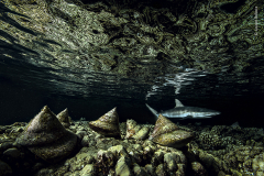 The night shift by Laurent Ballesta, France — Highly Commended 2020, Under Water