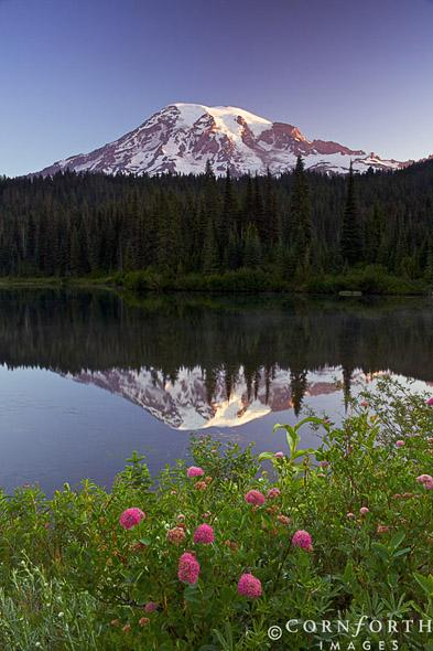 Reflection Lake Wildflowers 1, Mount Rainier National Park, Washington