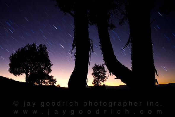 Star Trails over Pinyon Pine, Eagle, CO by Jay Goodrich