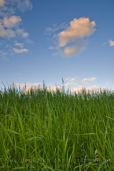 Grass Mound in My Backyard, Eagle, Colorado by Jay Goodrich