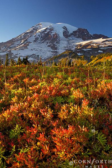 Mazama-Ridge-Fall-Colors-1_Mount-Rainier-National-Park-Washington