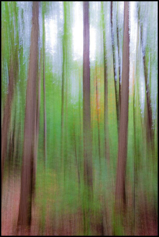 Impressionistic view of a hemlock forest in Antrim, New Hampshire.