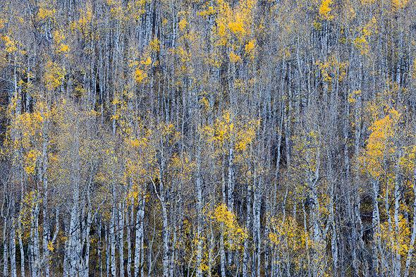 Telluride Colorado Autumn by Jay Goodrich