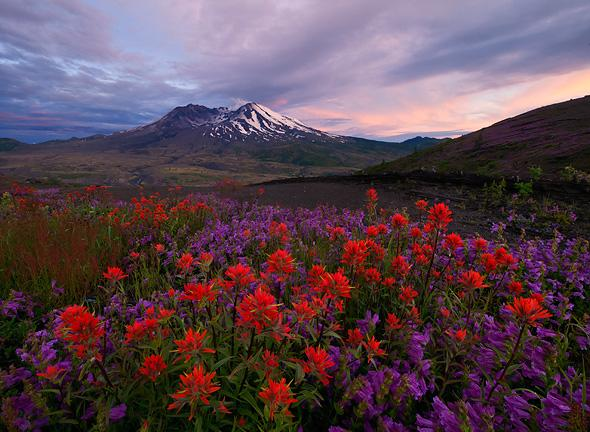 Sunset-and-wildflowers-Loowit-Overlook-Spirit-Lake-Highway-Mt-Saint-Helens-National-Monument-Washington