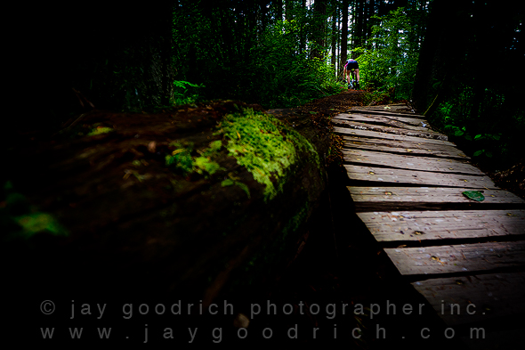 The Rainforest Canon 7D Test by Jay Goodrich