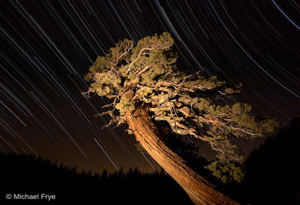 Juniper and star trails near Olmsted Point, Yosemite National Park