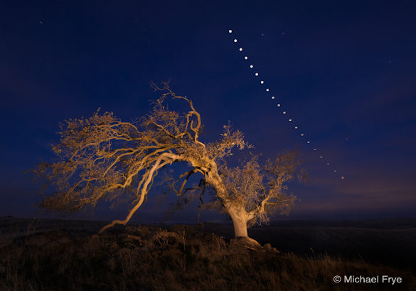 Oak tree and lunar eclipse sequence, Saturday, December 10th, 2011