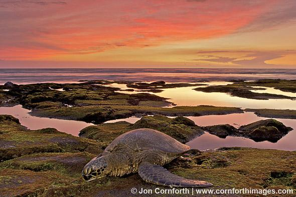 Honokohau Sea Turtle Sunset 1, Kohala Coast, Hawaii