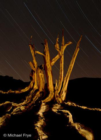 Bristlecone pine snag at night with star trails, White Mountains, California