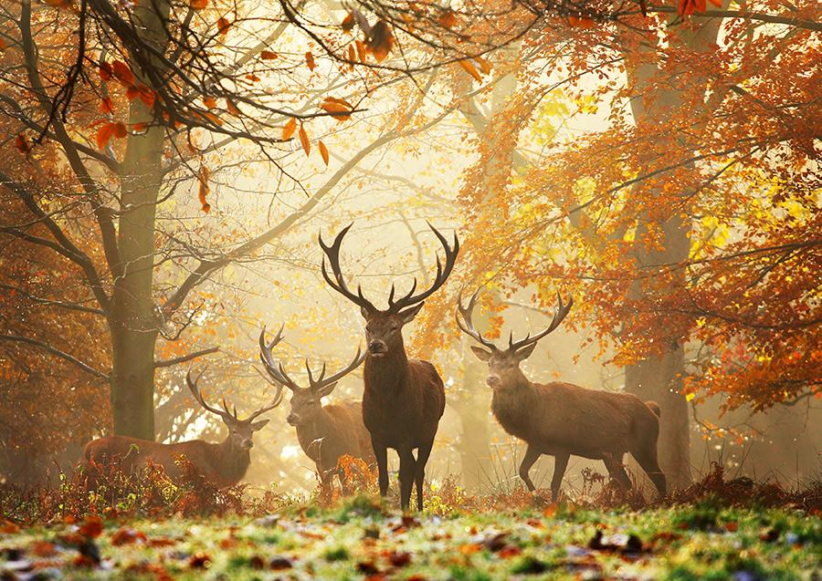 Realm-of-the-Deer-Alex-Saberi-Richmond-Park