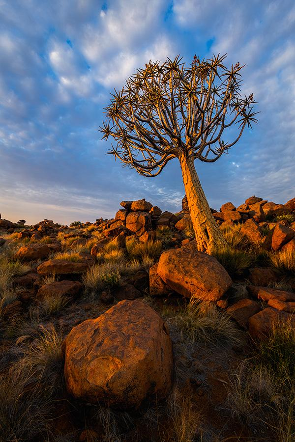 Quiver-tree-and-boulder-Giants-Playground-Quiver-Tree-Forest-Namibia