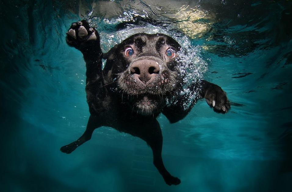 fetch-based games for the pool black labrador underwater shot photograph with Tokina AT-X 107 AF DX Fisheye lens and Canon EOS 7D