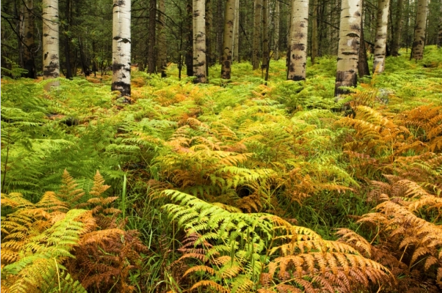 Forest Of Ferns by Mike Sherman
