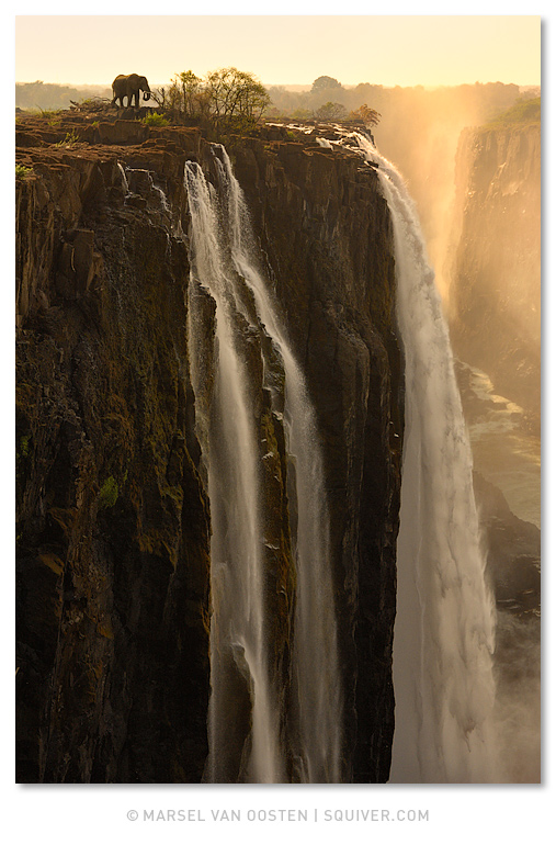 Marsel van Oosten, Marsel, Squiver 'The Edge' - African elephant on the Zambian side of Victoria Falls.