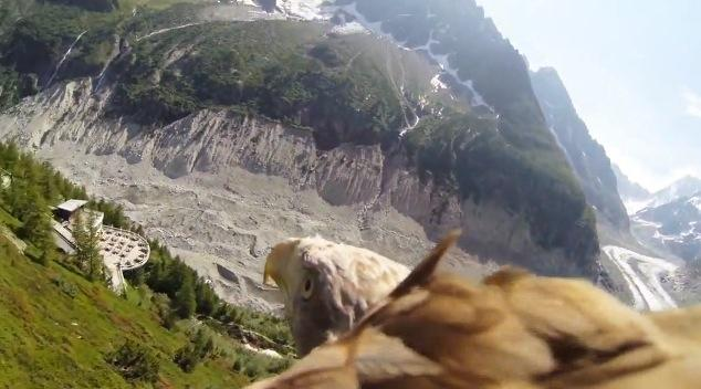 GoPro HERO action cam mounted to a flying eagle for overhead POV